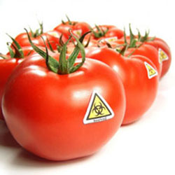 genetically-modified-food-gmo